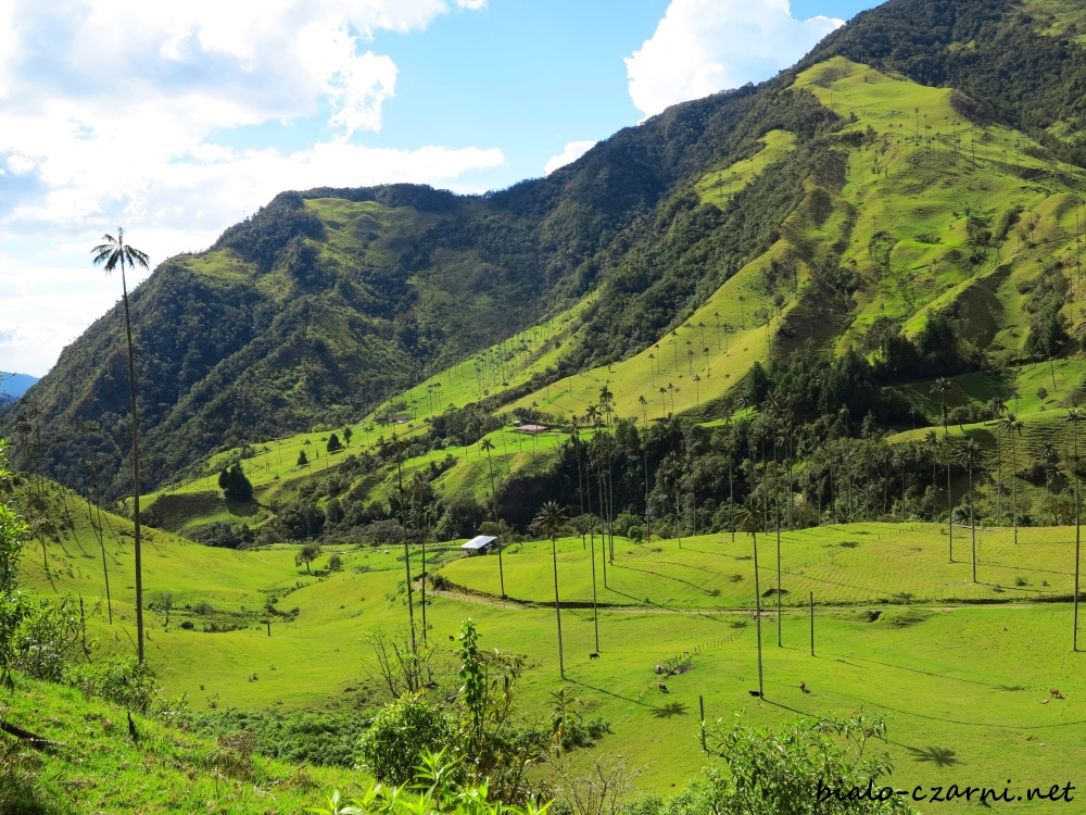 Kolumbia, Valle de Cocora14