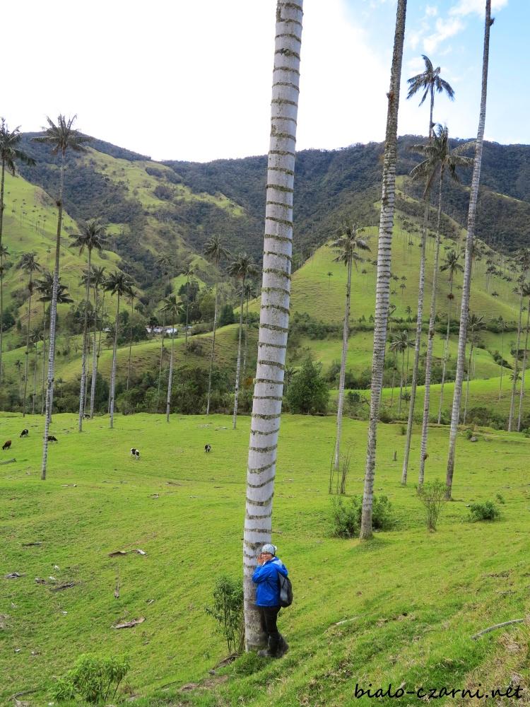 Kolumbia, Valle de Cocora15
