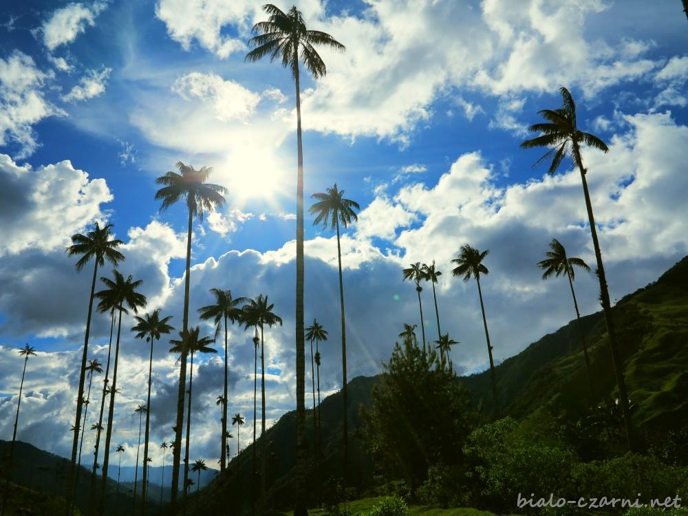 Kolumbia, Valle de Cocora19