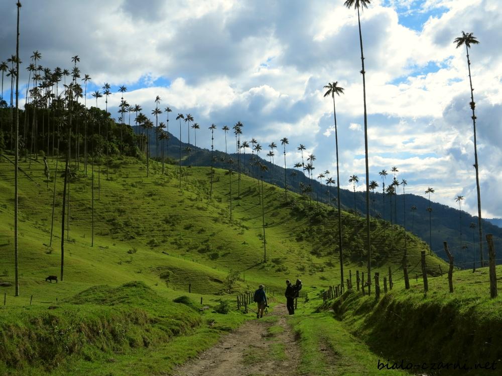 Kolumbia, Valle de Cocora21