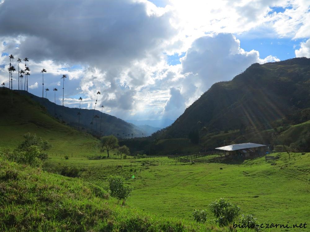 Kolumbia, Valle de Cocora22
