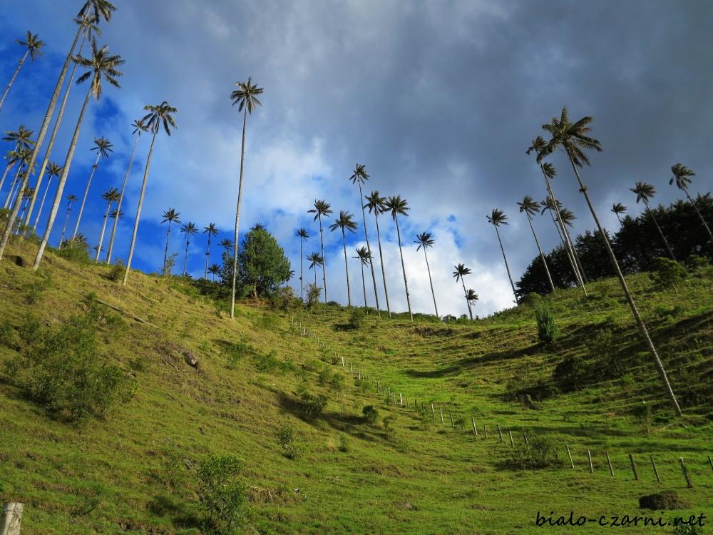 Kolumbia, Valle de Cocora24