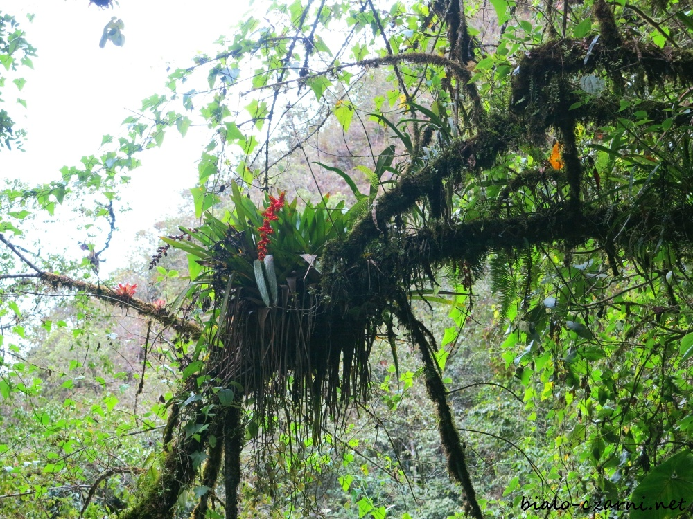 Kolumbia, Valle de Cocora3