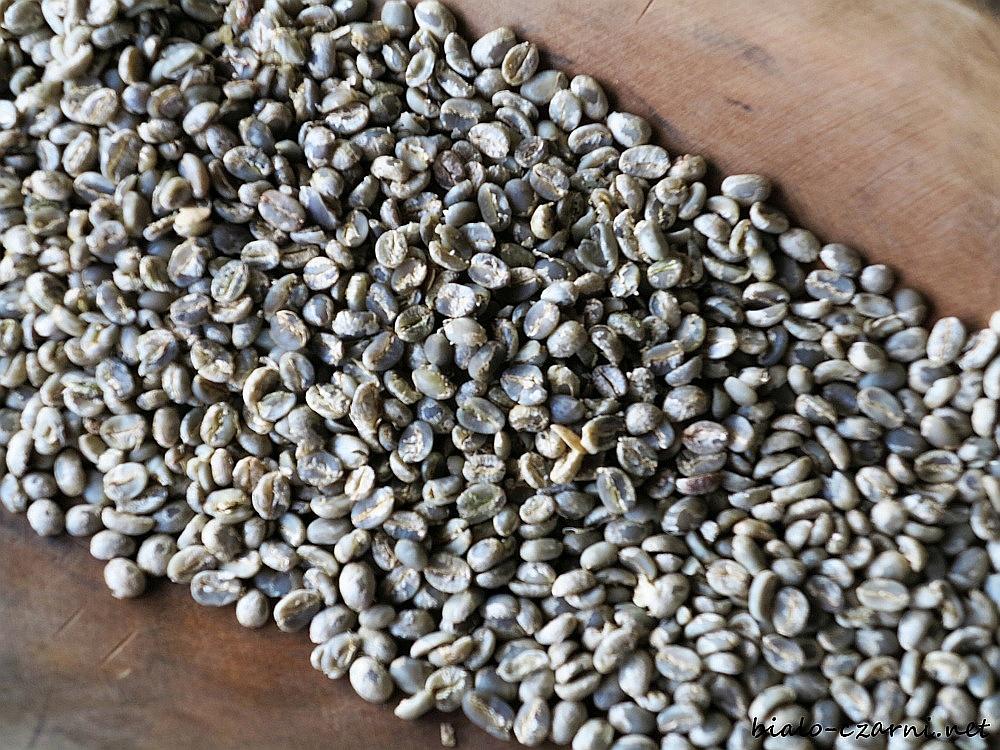 Kolumbia, plantacja kawy14