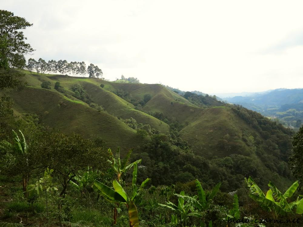 Kolumbia, plantacja kawy2