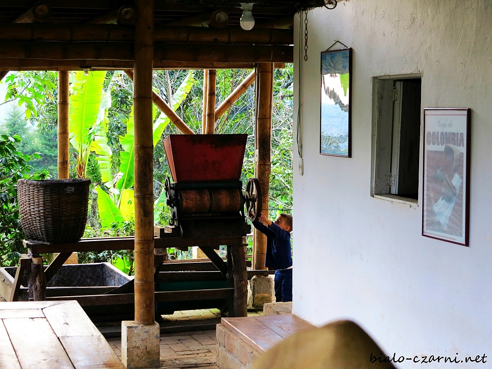 Kolumbia, plantacja kawy24