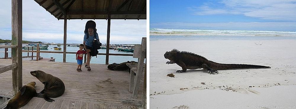 kolaż Galapagos