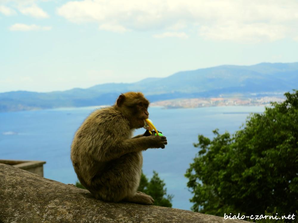 Gibraltar, magoty12