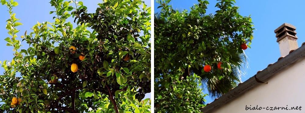 kolaz owoce 2
