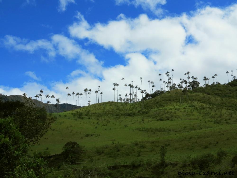 Kolumbia, Valle de Cocora1
