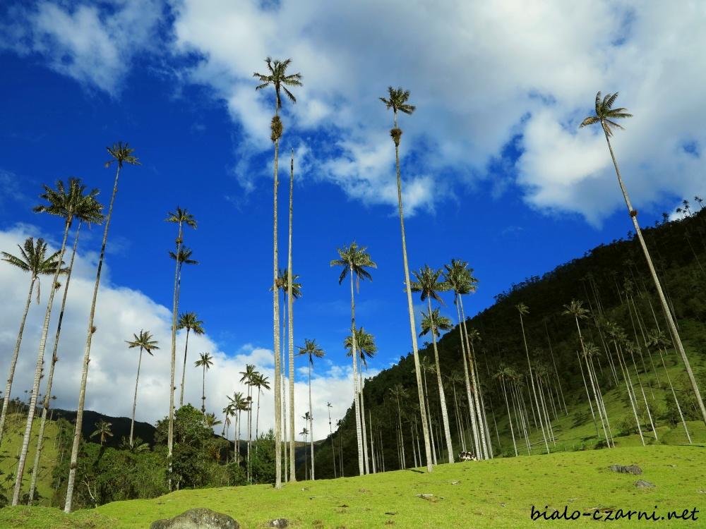 Kolumbia, Valle de Cocora20