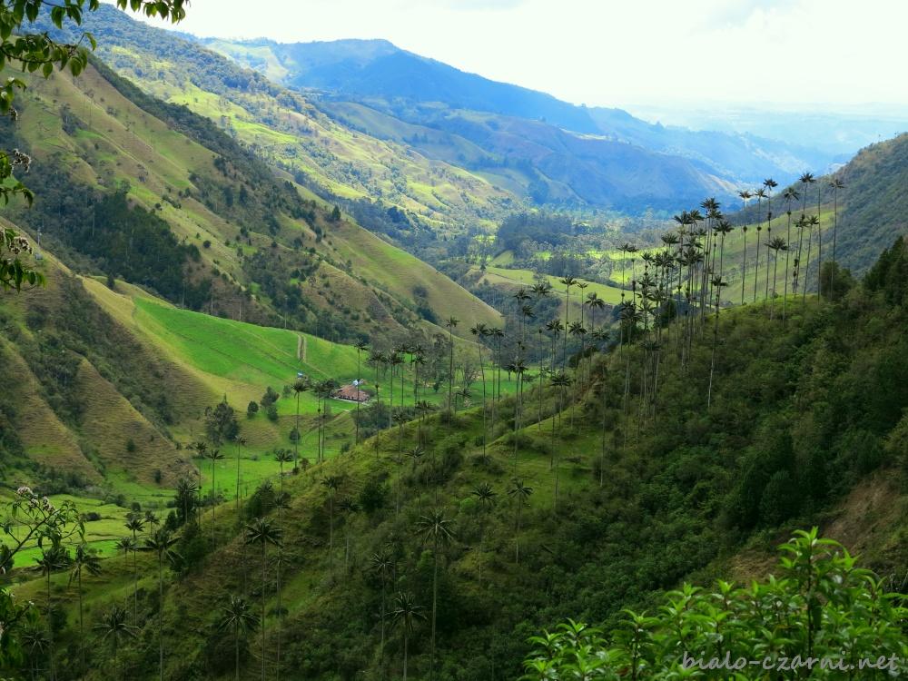 Kolumbia, Valle de Cocora6