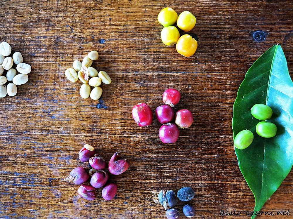 Kolumbia, plantacja kawy8