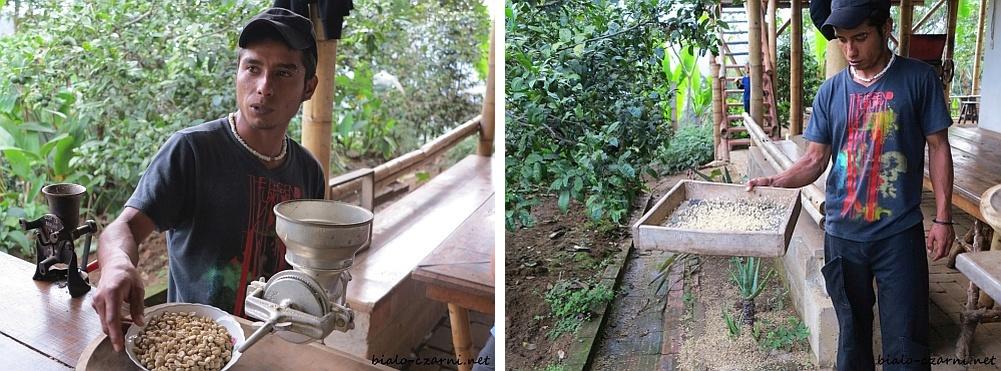 kolaż plantacja kawy2